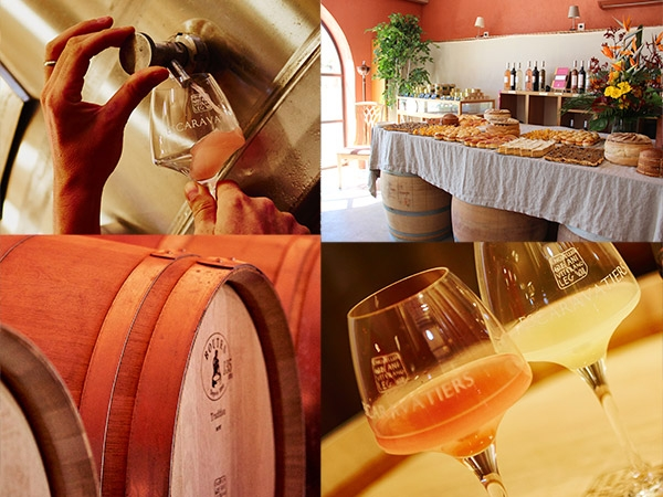 Visit the winery of the Domaine des Escaravatiers 2