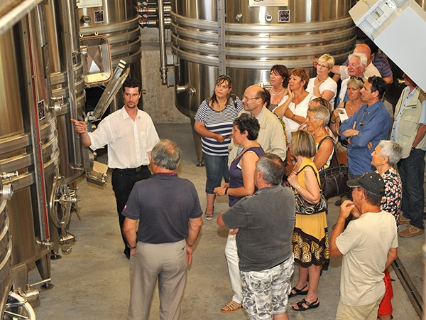 Visit the winery of the Domaine des Escaravatiers 3